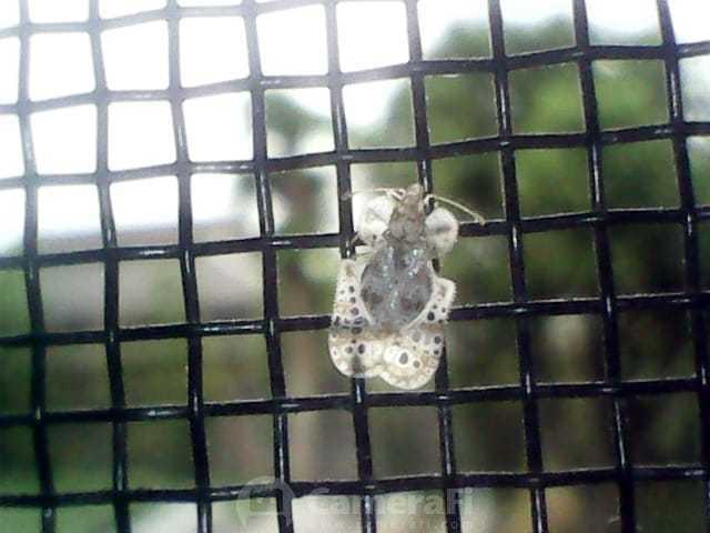 この虫の名前を教えてください 背景に見える網は網戸です