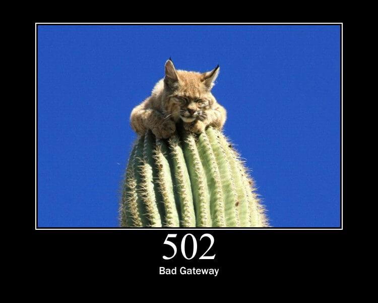 質問です。 今日、5月9日現在3DSを改造しようとおもい、https://bfm.nintendohomebrew.com/ いざやろうと、上のサイト(bruteforce movable)を開いてみたところ、画像のような猫の写真がでてきてしまいました。 なぜ出てきてしまうのでしょう。色々調べても出てこないので、詳しい方、知っている方がいたら回答お願いします。 ちなみに、ゆうま村長のできない人用のhttps://m.youtube.com/watch?v=N7tQlt4MgNs 動画からも、張り付けてあるURLにとんでやってみましたが、「安全ではありません」みたいなそんな赤い枠がでてきます。 その上にある緑の文字の、他のサイトにとぶところも、行ってみましたがやはり「bruteforce movable」のサイトを勧められ、振り出しにもどってしまいます。 改造批判とかは大丈夫です。 どうかよろしくお願いします。