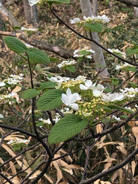 これ何の花・または何の木か知ってる方いたら教えてほしいです 低木で1本だけ生えていました。