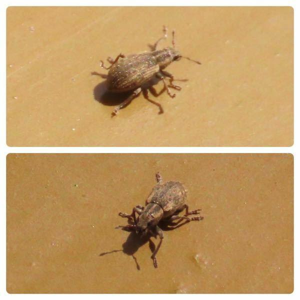昆虫の種類 写真の昆虫について 種類が分かる方、ご教示ください。 本日佐賀県で撮影したものです。