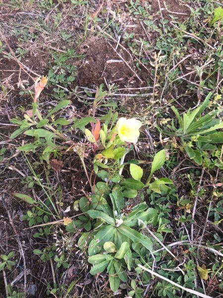 この黄色い花は何でしょうか?