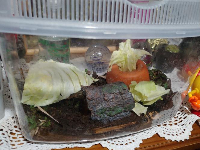 緑色の芋虫の飼育セットってこんな感じで大丈夫ですかね? 他に何かあればアドバイスください! 今現在蓋の裏にくっついてます