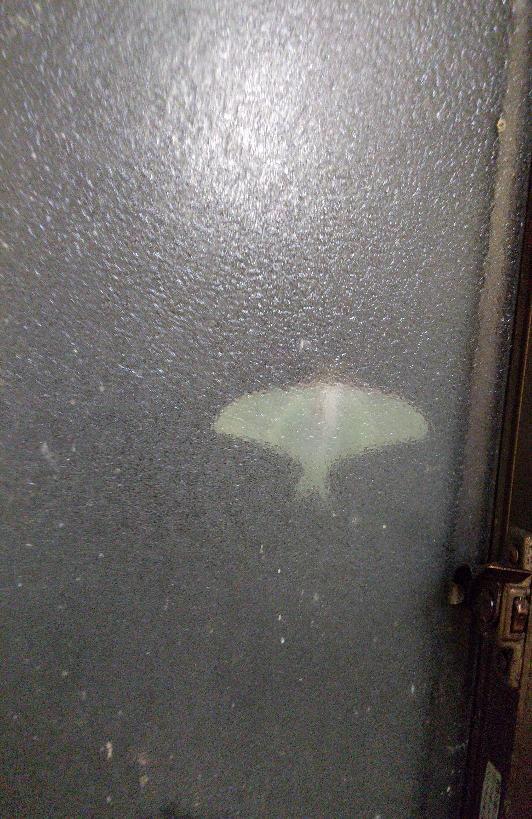 この写真の虫について質問です! 今日の夜、洗面所の窓をふと見たら、大きく羽を広げた虫がいました。 何の虫でしょうか、やはり時期的に蛾でしょうか? 知ってる方が居ましたら、回答お願いしますm(_ _)m (すりガラスのため、曇ってわかりづらいです!すみません…。)