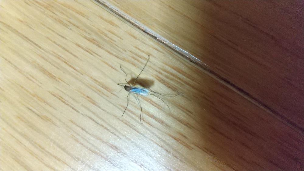 この虫はなんですか? 家の中によくいます。 ベープマットも効かなくて困っています。 大きさは5センチくらい? 目で確認出来ます。 手足が長くて 一見して蜘蛛のようです。 写真を張りましたので、良かったらみてください 住まいは東京都港区で、周りには木が多いです。