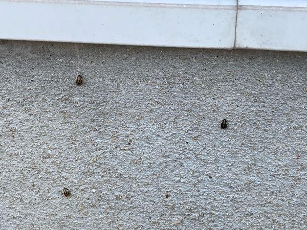 この幼虫?卵?はなんですか?外の壁についていました。 何か対策が必要でしょうか。