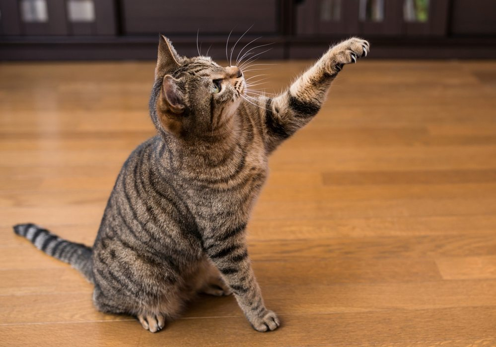 猫はネコなりの筋トレしてますよね?