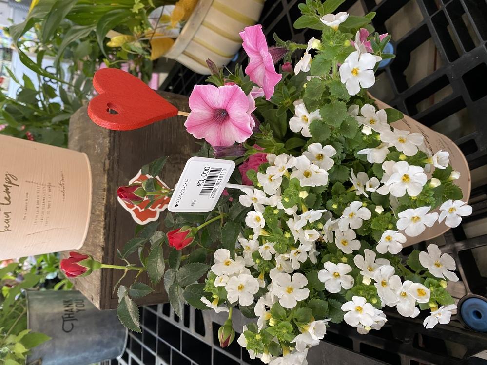 写真の白い花の名前を教えて下さい。買いそびれてしまいました。 宜しくお願いします。