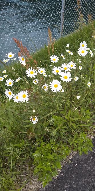 この白の花の植物の名前を教えてください