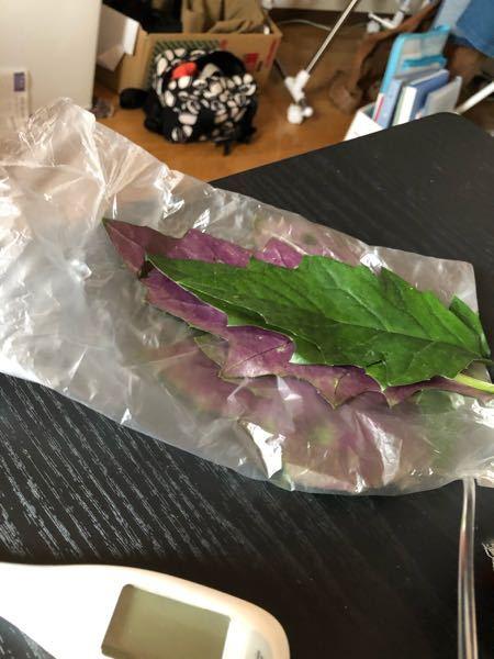 裏色がが異なる色の山菜はなんでしょうか? 安芸市でいただいたとおっしゃっておりました。