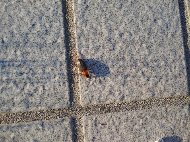 この虫の名前教えてください