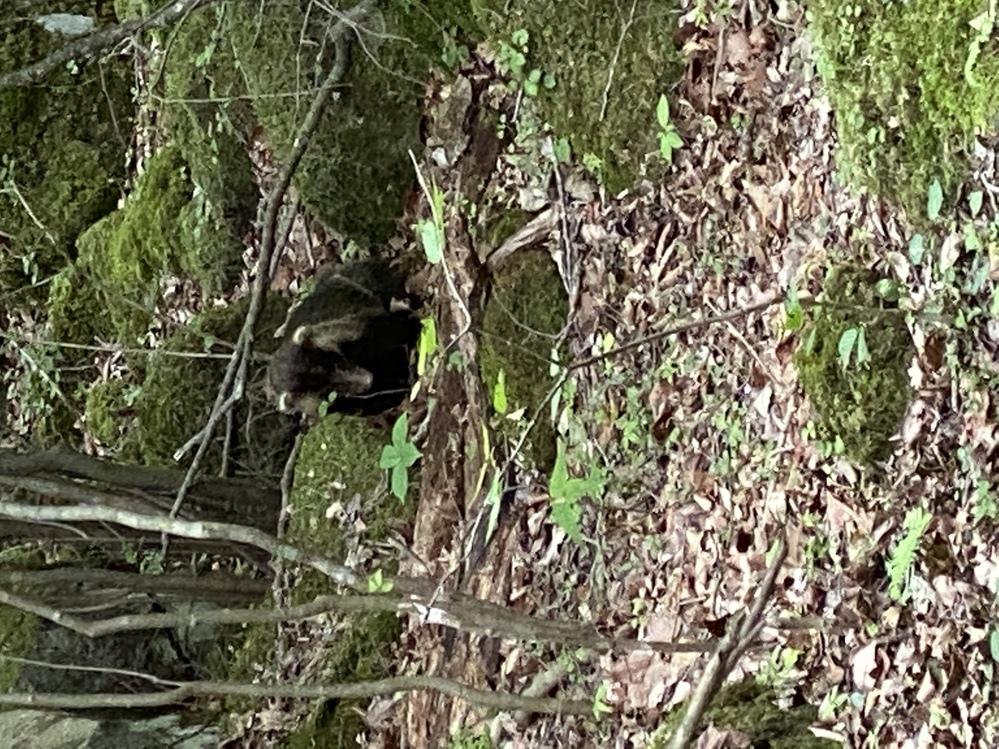 先日、九州の大分県に行った時に、森林の中で偶然出会った、黒い物体です。何かわかりますか? 顔と上に白い耳みたいのがあるような気がします。最初は、イノシシの子どもかなって思っていましたが、近づいて...