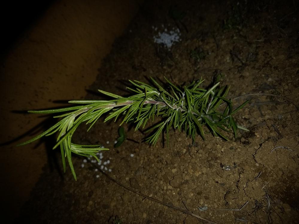 この植物なんですか?突然花壇に植えられていました。