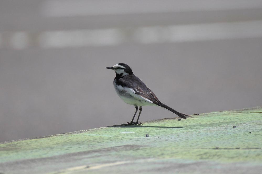 写真の鳥の名前を教えてください!