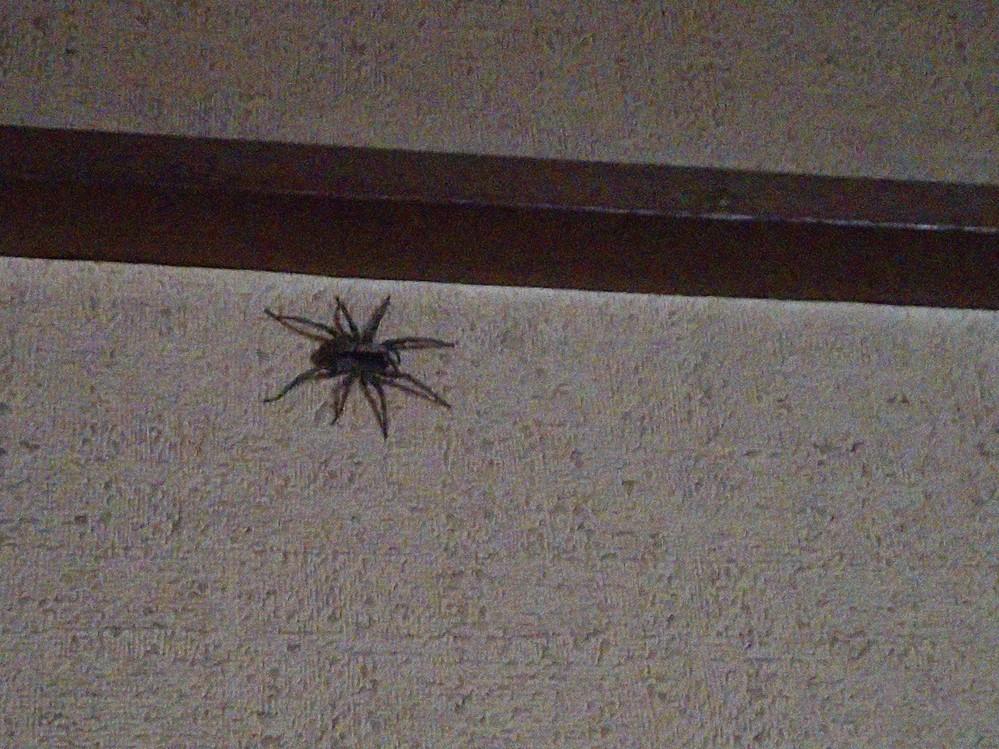 このクモは何というクモでしょうか。