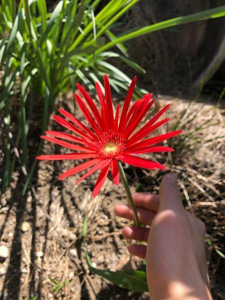 この赤い花は何ですか?
