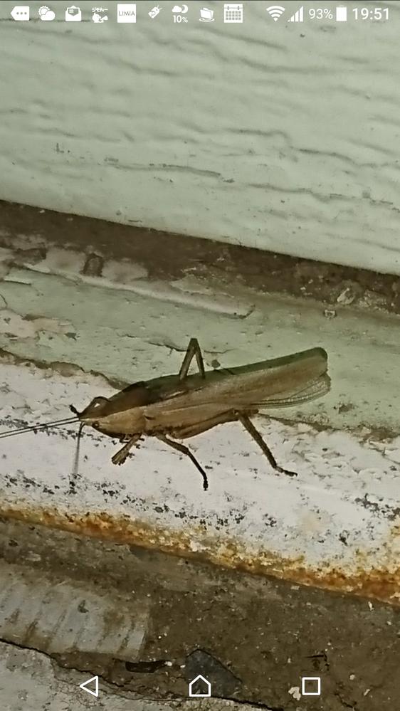 この虫は? 音を出しますがうるさいです。