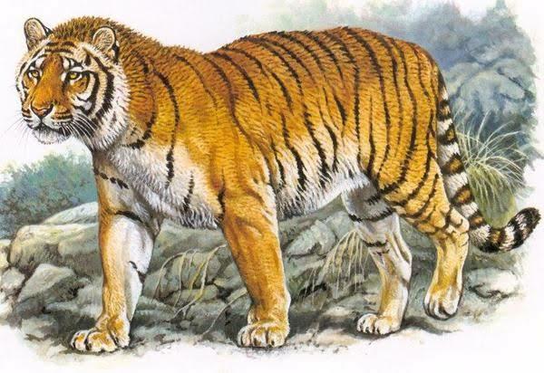 ベンガルトラ最大級個体VSアメリカクロクマ最大級個体が本気で戦ったらどの様な勝負になりますか?