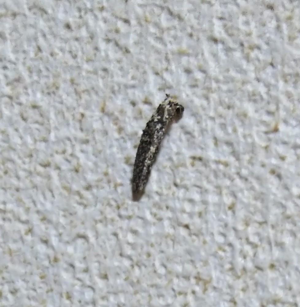 これは何ですか?芋虫みたいに壁を登っています。きもい。