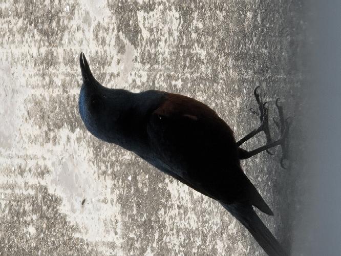 この鳥の名前はなんでしょうか?