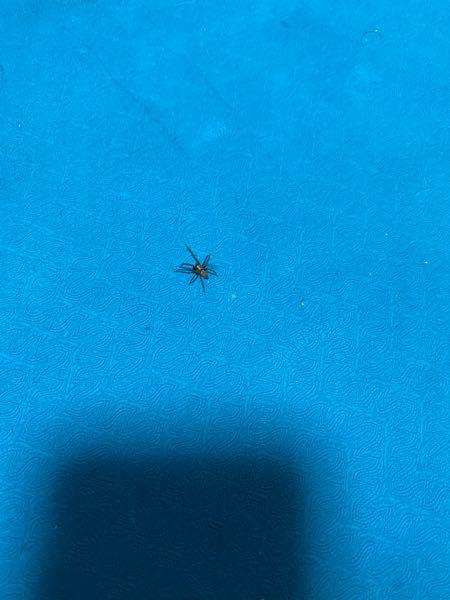 これなんの蜘蛛ですか? さっき天井からスーッとおりてきたんですけど