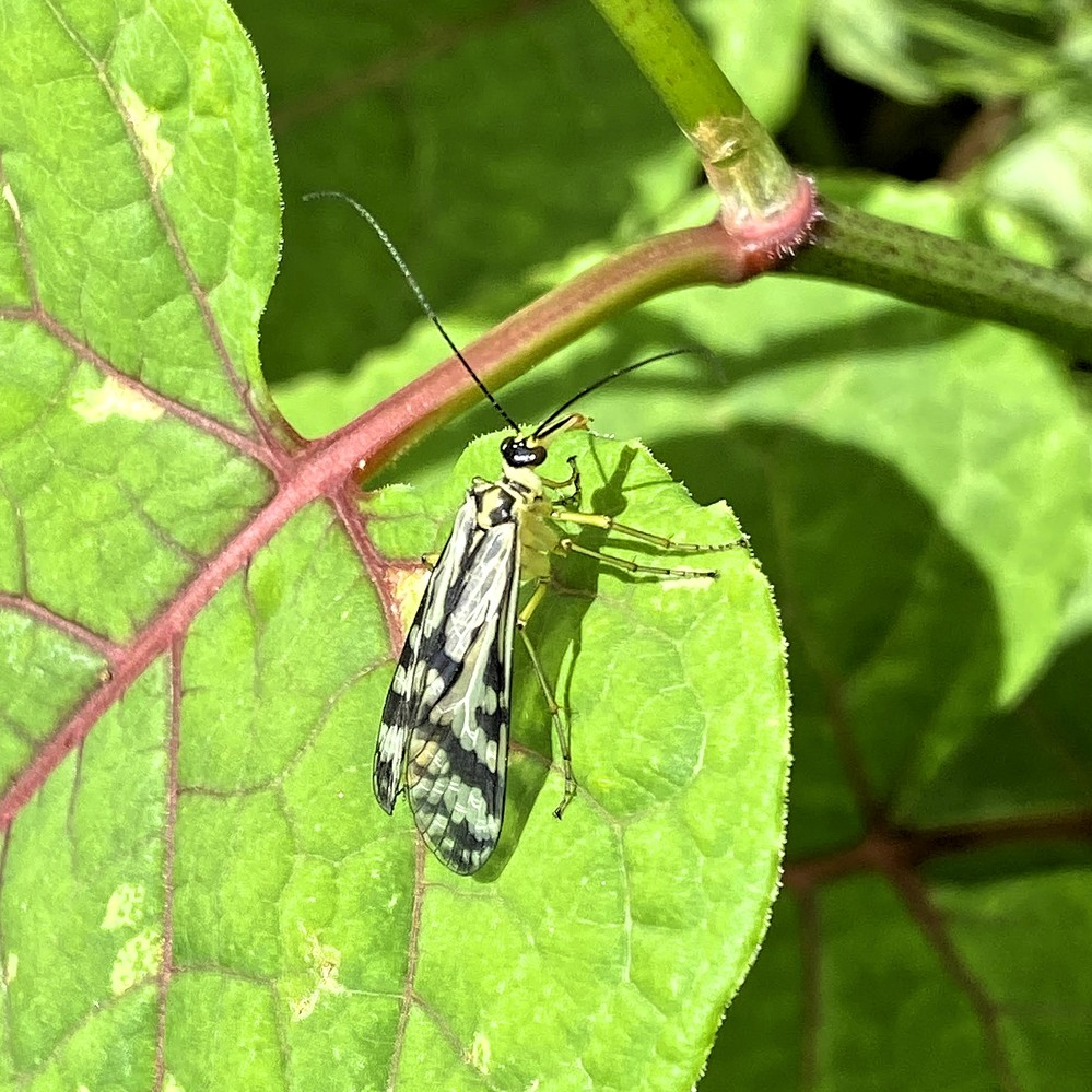 ひなたぼっこしている虫の名前を教えてください。