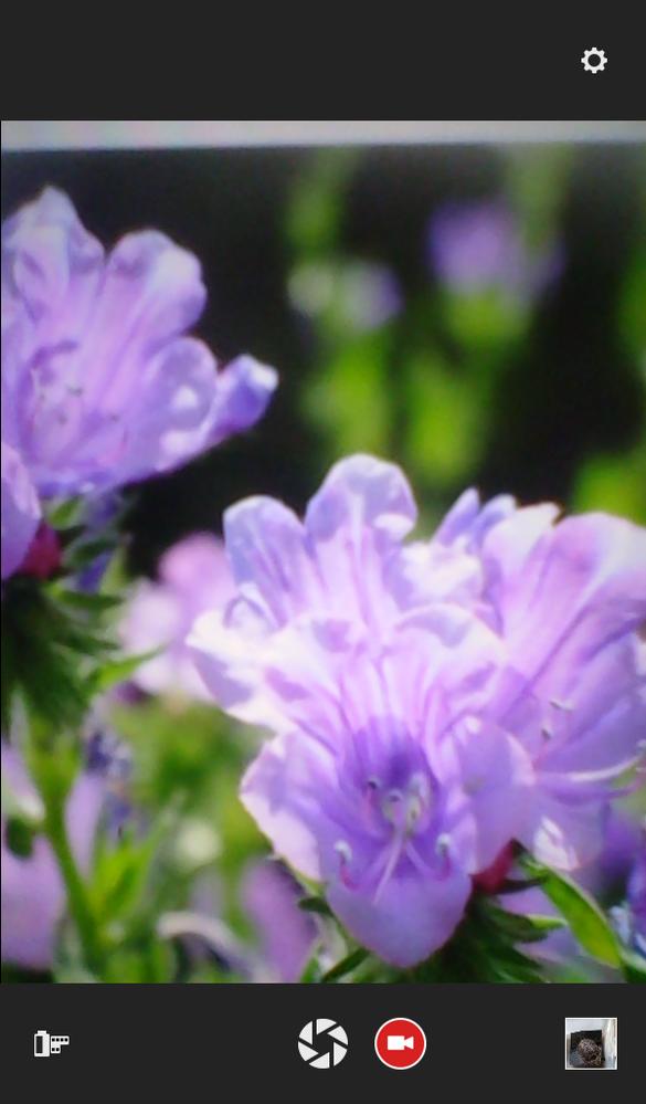 この薄紫の花の名前を教えてください。5月初めに撮影しました。よろしくお願いいたします。