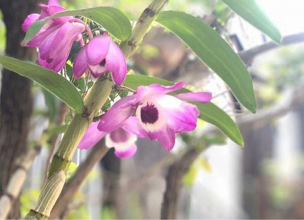 このお花の名前、教えて下さい。