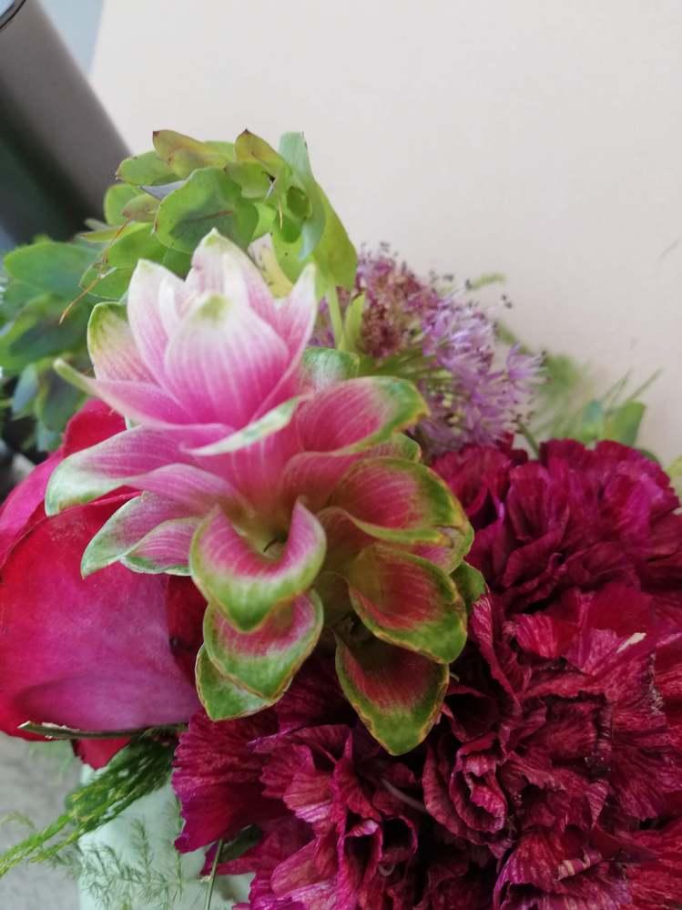 この植物の名前を教えてください この画像の中央、お花なのかカラーリーフなのか わからないのですが・・・ グーグルレンズで検索するとバラの花が表示されました バラではないような気がしています どなたかご存知の方がいらっしゃいましたら 教えていただけないでしょうか