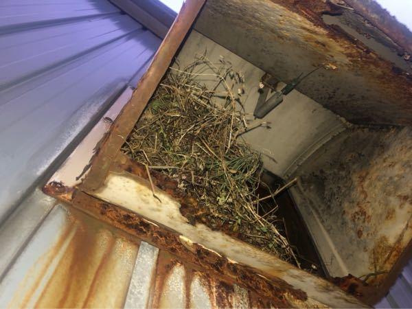 これは何の巣かわかりますか? 家の2階のダクトにできました。 よろしくお願いします。