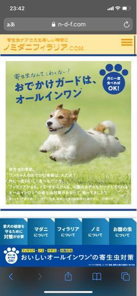 この画像のわんちゃんの犬種分かる方いたら教えて頂きたいです!