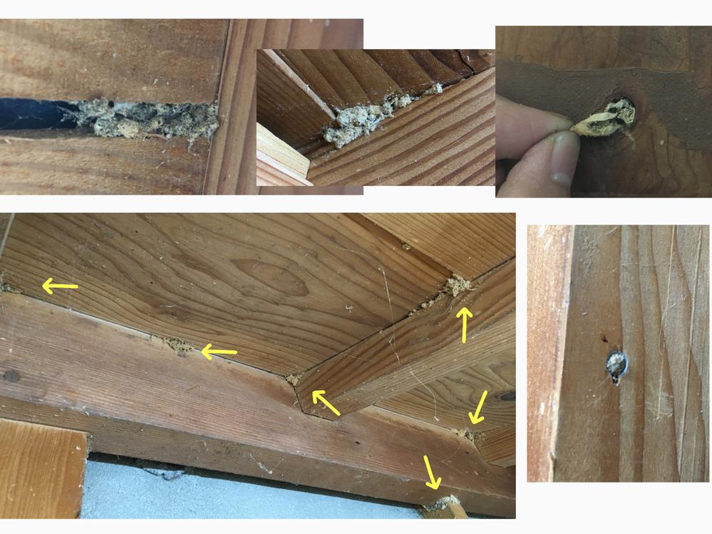 害虫?に詳しい人教えて下さい! 古い家の柱などの木部に綿状の繭?抜け殻?のようなものが大量にあります これは何かの虫の抜け殻なのでしょうか? 木に穴をあけて埋まってたり、隙間という隙間全てにあ...