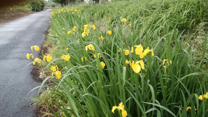 皆さん、お早うございます。ナンコです。 今日は、社用外出です。 お役所を沢山めぐるのは面倒ですね。 でも頑張ります。 では、今日もヨロシクです! さて、この花は何でしょう?