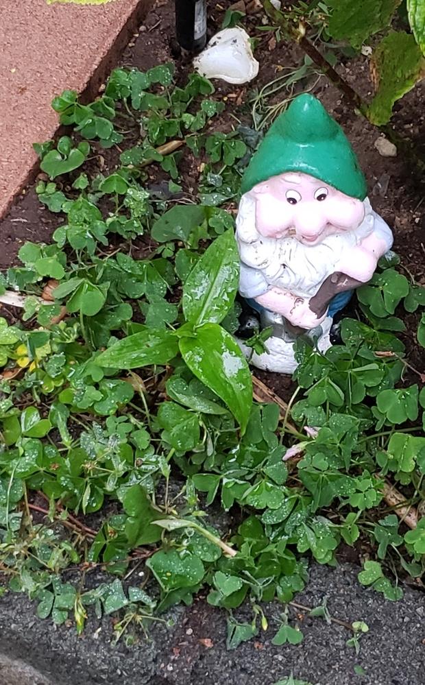 植物の名前、教えてください。 小人の左隣の葉っぱです。