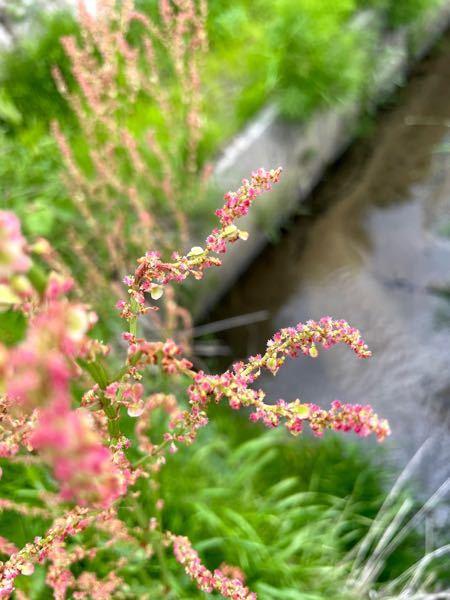 花の名前が知りたいです。 お散歩をしたら見つけたのですが、調べても名前が出てこず、質問させていただきます!花のことをよく知っている方、お力お貸しください!!