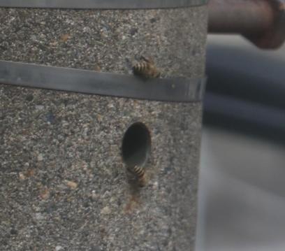 これは何蜂でしょうか?
