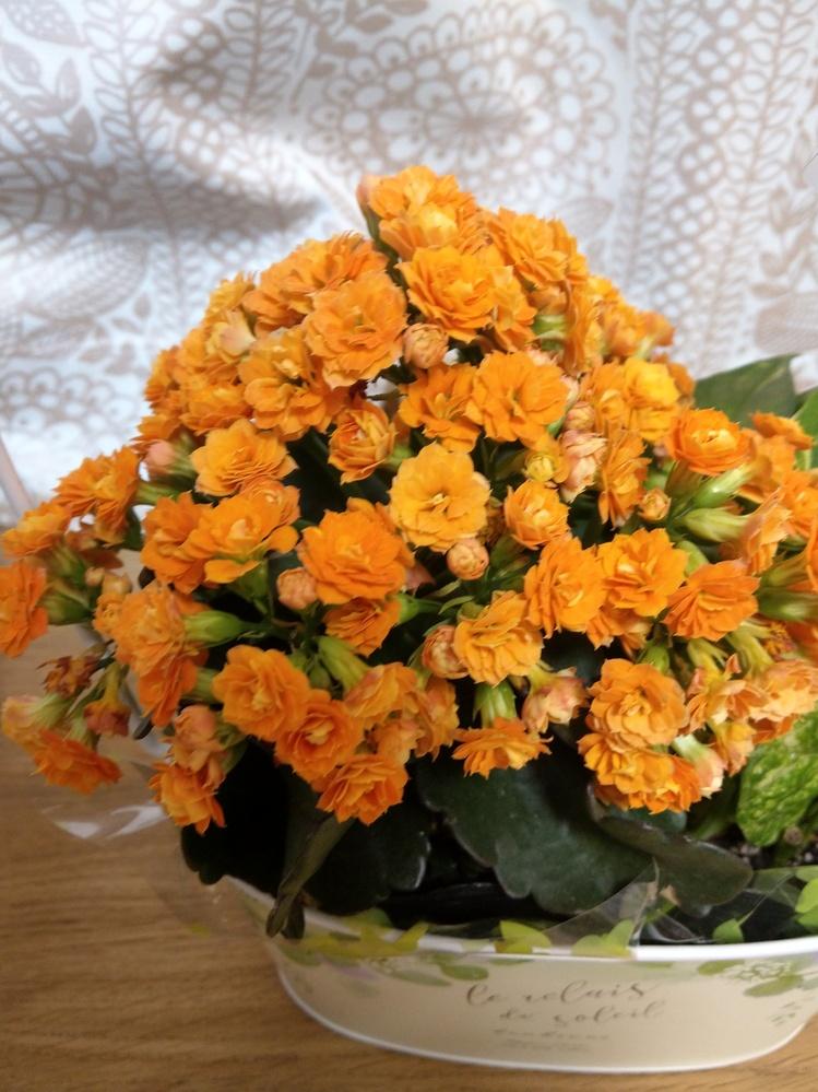 写真のお花は何でしょうか?母の日にもらったのですが、名前が分かりません。