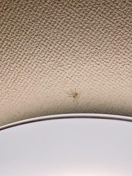 イエグモについて この蜘蛛は害などはありますか? イエグモは殺さない方が良いと言われていますが、目撃すると少し怖くて…。 虫が苦手で、田舎に引っ越してから虫が多くて出る度にビビっています。 蜘蛛はこの位置からあまり動かないです。 画像小さくてすみません。