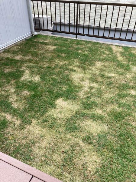 3月に外構が終わり芝生を張ってもらったのですが育ち方がバラバラです。 このままでも夏頃 には全体的にあおくなるのでしょうか? 日当たりのいいところでも生えていません アドバイス等よろしくお願いします
