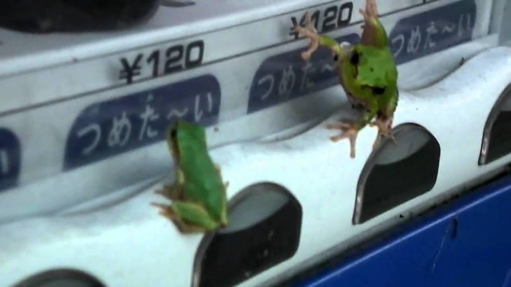 自販機です。。 どうしてボタンの部分に、蛾とか、カエルとか貼り付いているのでしょうか??