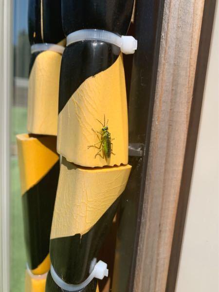 これはなんていう虫ですか?