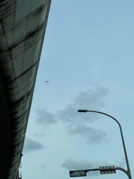 この猛禽類わかりますでしょうか? 画質悪くてすみません 愛知県の甚目寺の302号で5月15日に見かけました 尻尾は長くトビよりずいぶんと小さかったです