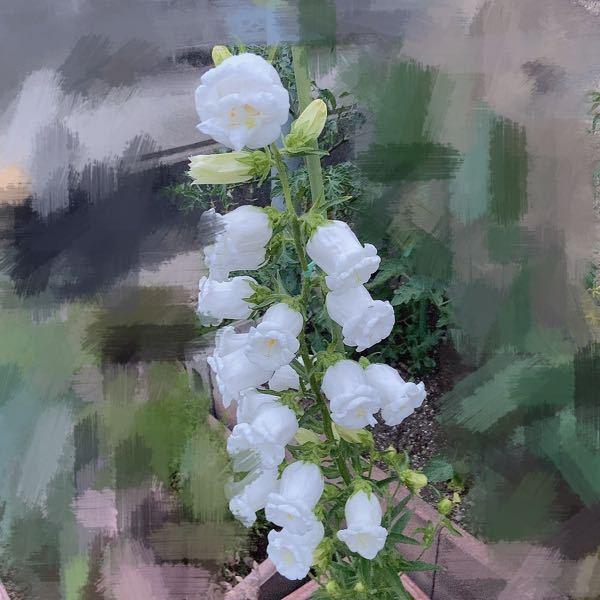 これは何というお花でしょうか?