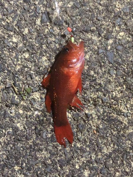 この魚は何ですか?毒は無いでしょうか??