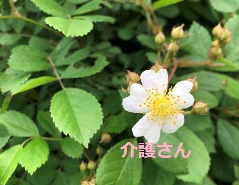 この花の名前は何ですか? 撮影場所は兵庫県で、撮影日時は2021年4月22日です。 よろしくお願いします。