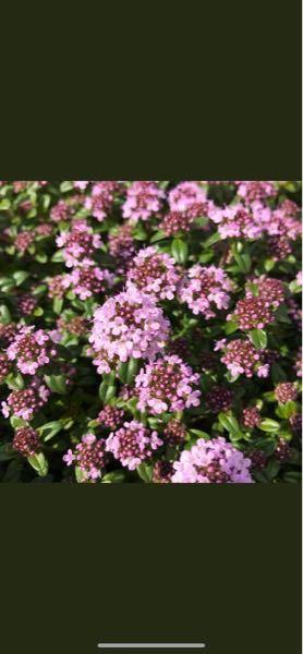 この花の名前教えてください