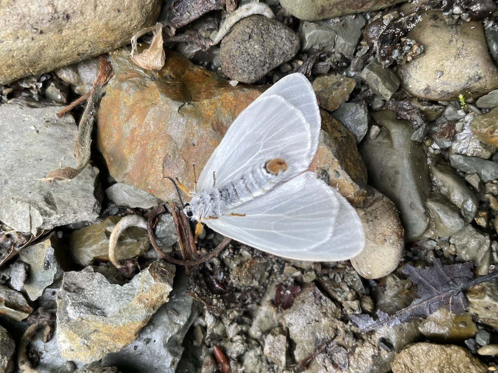 この蝶の名前がわかる方、是非教えて下さい。