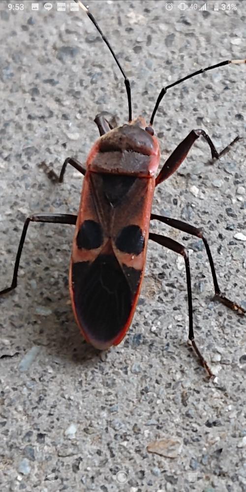 この虫の種類を教えてください。 よろしくお願いします。