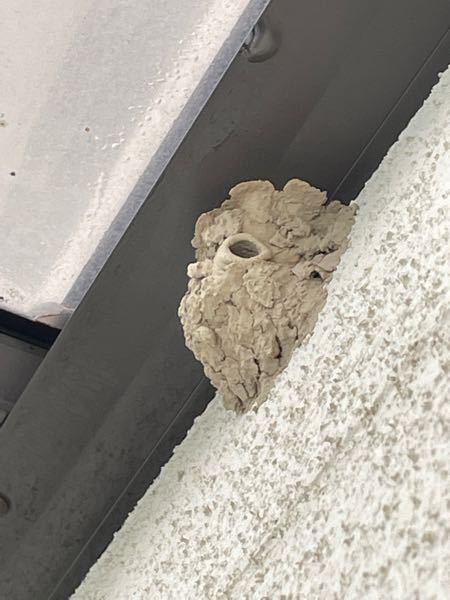 ベランダに謎の巣があります。一体何の巣でしょうか、、、。 ベランダの高い所に泥で固めたような直径12,3cmの巣が出来ていました。巣から50cm程離れたベランダの竿の下にはたくさん鳥のフンが落ちていました。 巣にはなにもいない様子でしたが、最近は近所でツバメやコウモリが飛んでいます。 何の巣か分からずとても怖いです。 分かる方、いらっしゃったら回答お願いします。