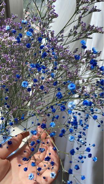 この花は何という花ですか? ネットで拾いました。 ご回答お待ちしております。