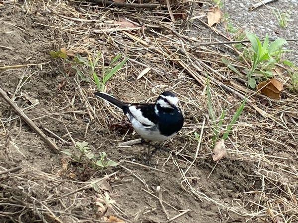 この鳥はなんて言う鳥ですか?
